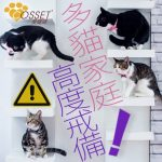 【Attention! Those who keep several cats please look here!】