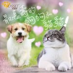 【Do you know how old are the longest living dog and cat?】