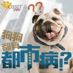 "【Refuse to turn your dog into ""urban dog""】"