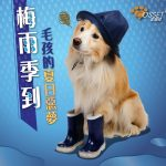 【Rainy season is coming! Why my dog's skin condition turns bad?】