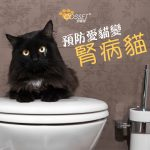 【Attention! Up to 50% chances for cats suffering from kidney degeneration!】