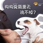 【Why do dogs always have body and mouth odor?】