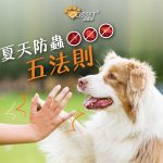 【How to keep your dog away from parasites this summer?】