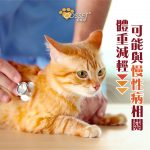 【Is your cat suffering from weight loss?】